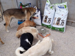 Spendenankunft Zenias Tiere 2