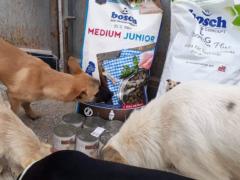 Spendenankunft Zenias Tiere 3