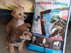 Spendenankunft Zenias Tiere 4