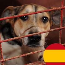 spenden-marathon-2018-vereine-pro-hund-andaluz
