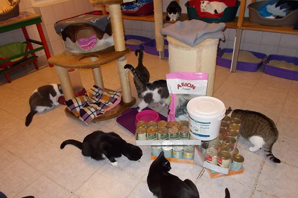 Spendenankunft-Streuner-Rettung-Katzenhilfe-Hoyerswerda-1