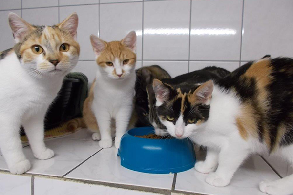 Spendenankunft-Streuner-Rettung-Katzenhilfe-Hoyerswerda