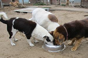 Beitragsbild-Blogbeitrag-Tierschutz-Jahr 2018 Rückblick