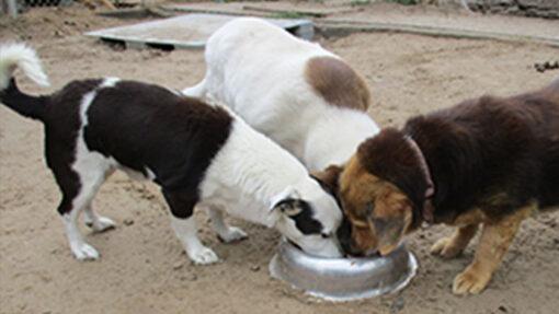 Gemeinsam mit dir blicken wir zurück auf das Jahr 2018 und was wir mit Tierschutz-Shop für Tiere in Not erreicht haben.