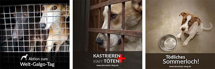 Alle Spendenaktionen 2018 von Tierschutz-Shop