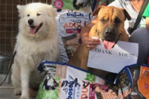 Jahresrückblick-Tierschutz-Jahr-2018-Tierschutz-Shop