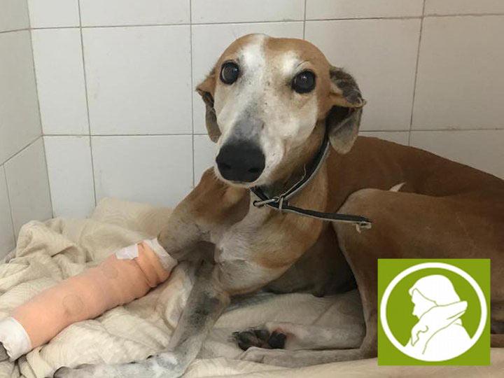 Tierschutz_Spanien_Vereinsbild_2019-
