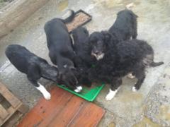 Spendenankunft Hunde in Satu Mare 1