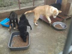 Spendenankunft Hunde in Satu Mare 4