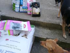 Spendenankunft Menschen helfen Tieren Worms 1
