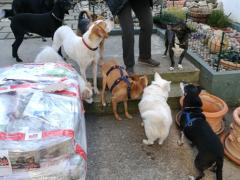Spendenankunft Menschen helfen Tieren Worms 2