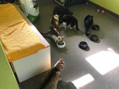 Spendenankunft Pet Crew 3