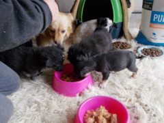 Spendenankunft Pro Animals Deutschland NEU 1