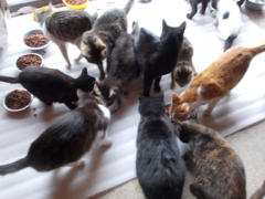 Spendenankunft Pro Animals Deutschland NEU 2