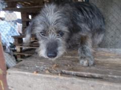 Spendenankunft Pro Animals Deutschland NEU 3