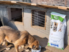 Spendenankunft Salvate Canes 2