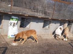 Spendenankunft Salvate Canes 4