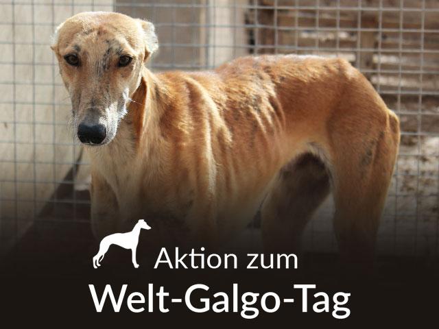Tierschutz-Shop__Aktion_zum_Welt_Galgo_Tag_2019_Bild_Homepage_Desktop_640x480