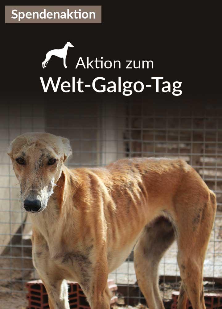 Tierschutz-Shop__Aktion_zum_Welt_Galgo_Tag_2019_Bild_Homepage_Mobil_720x1000