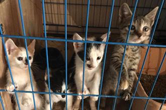 Welpen--und-Kitten-Alarm-vier-kitten