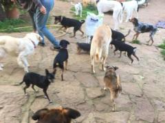 Spendenankunft Ein Zuhause für verlassene Tiere e.V. 3