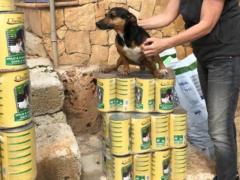 Spendenankunft Ein Zuhause für verlassene Tiere e.V. 4