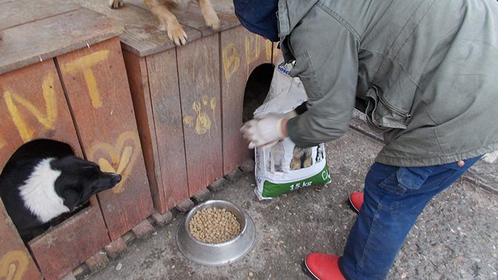 Pro Animals Deutschland NEU (3)