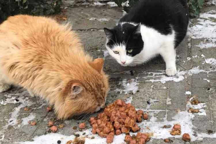 Tierschutz-Shop Spenden-Marathon für Tiere 2018 Spendenankunft bei Wags his tail e.V.