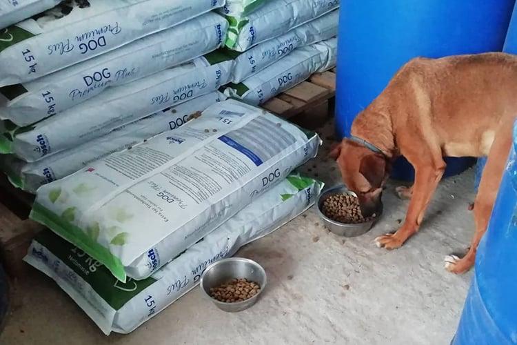 Spendenankunft Spenden-Marathon für Tiere 2018 pro Hund andaluz e.V.