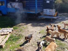 Spendenankunft_Die vergessenen Samos Hunde e.V. 1