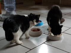 Spendenankunft_Katzenschutzverein Wolgast e.V. 2