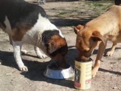Spendenankunft_Look Tierschutzverein 1