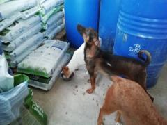 Spendenankunft_pro Hund andaluz e.V. 2