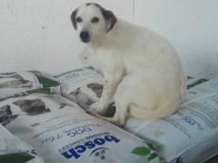 Spendenankunft_pro Hund andaluz e.V. 3