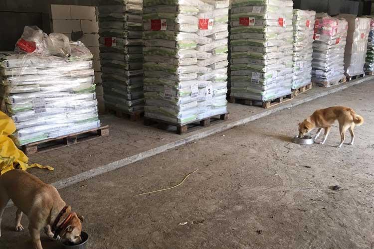 Tierschutz-Shop Spenden-Marathon für Tiere 2018 Spendenankunft bei Tapfere Pfoten e.V.