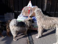 Spendenankunft Tierschutzhunde Russland e.V. 2