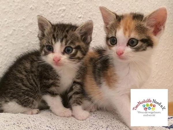 Welpen-und-Kitten-Alarm-Vereine-Tiernothilfe-nor