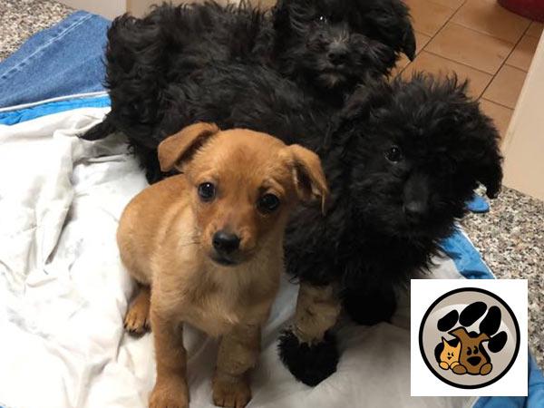 Welpen--und-Kitten-Alarm-Vereine-tierhilfe-pfotentraum