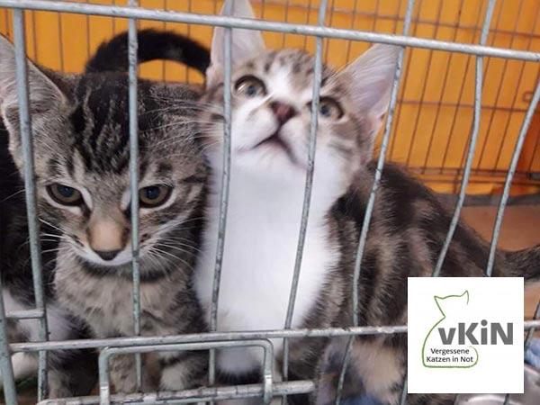 Welpen-und-Kitten-Alarm-Vereine-vergessene-katzen-in-Not