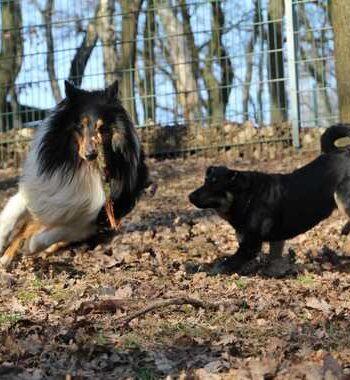 Tierheim Siegen Hunde