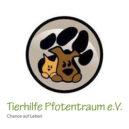 welpen-und-kitten-vereinslogo-tierhilfe-pfotentraum