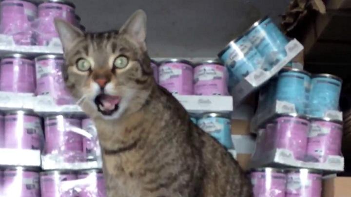Spendenankunft Spenden-Marathon für Tiere 2018 Katzenhilfe Karlsruhe e.V. 1