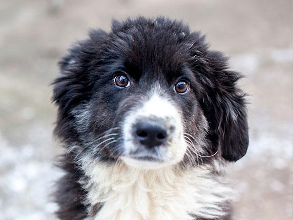 Spenden-Marathon-fuer-Tiere-Hund