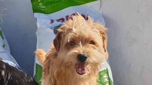 Die Futterspenden vom Spenden-Marathon für Tiere 2018 kommen bei den Fellnasen an.