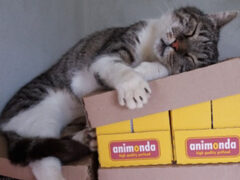 Spendenankunft_Katzenhilfe