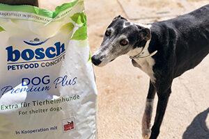 Tierschutz-Shop-Aktion-zum-Welt-Galgo-Tag-2019-Spendenankunft-Galgorettung-Fränkisches-Seenland