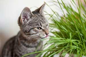 Wir zeigen dir, was deine Katze nicht fressen darf.