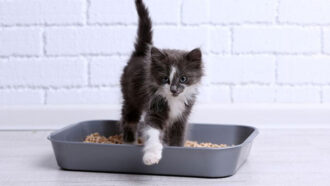 Durchfall Katzen Ursachen