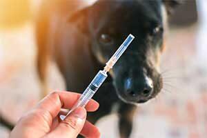 Hunde impfen: ja oder nein?