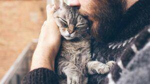 Was bei der Kastration von Katzen zu beachten ist
